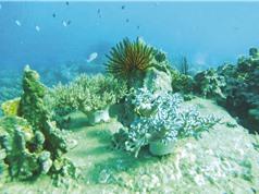 Suy giảm 90% san hô ở Nha Trang