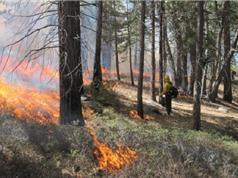 Cháy dữ dội và thường xuyên tổn hại đến khả năng thu nhận carbon của rừng