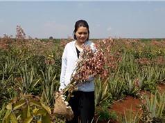 Gen Green: Lan tỏa phương pháp trồng trọt hữu cơ