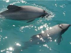 [Video] Dự án máy bay không người lái bảo vệ cá heo khỏi nguy cơ tuyệt chủng