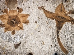 Nghiên cứu mới làm sáng tỏ bí ẩn về nguồn gốc thực vật hạt kín