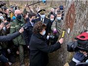 Pháp chọn những cây sồi đầu tiên để tái thiết Nhà thờ Đức Bà Paris