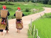 Ai hưởng lợi từ những con đường mới ở nông thôn Việt Nam?