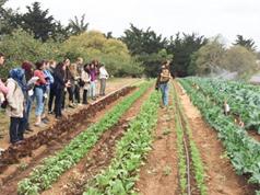 Thay đổi hệ thống lương thực để ngăn chặn các đại dịch tương lai