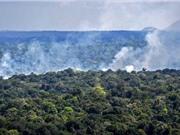 Tình trạng mất rừng tăng mạnh