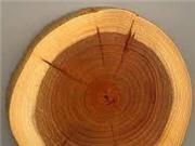 Nhựa sinh học làm từ bột gỗ phân hủy hoàn toàn trong ba tháng