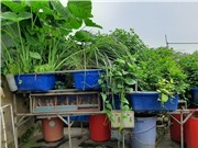 Làm sạch sông Tô Lịch bằng giải pháp sinh thái?