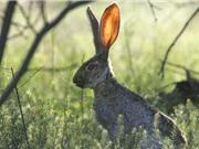 Khoảng trống hiểu biết về phản ứng của động vật có vú với biến đổi khí hậu