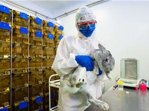 Vaccine Covid-19 đầu tiên dành cho động vật