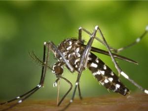 Sinh vật xâm lấn gây thiệt hại gần 27 tỷ USD mỗi năm