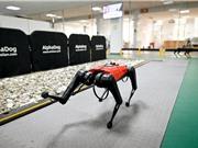 Công ty công nghệ Trung Quốc phát triển chó robot