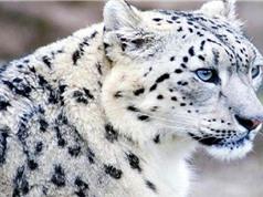 Một phần ba số loài đặc hữu có nguy cơ tuyệt chủng