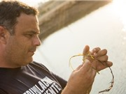 Gạo từ cỏ biển: Nguồn lương thực mới cho tương lai