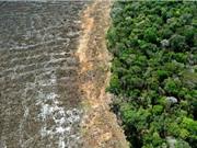 Chỉ 3% hệ sinh thái Trái đất còn nguyên vẹn