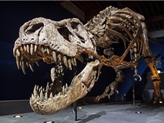 Trái đất từng có bao nhiêu khủng long bạo chúa T.rex?