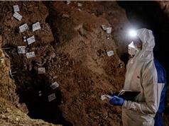 Phục hồi các bộ gen cổ đại từ đất
