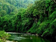 Mỹ hỗ trợ bảo tồn rừng và đa dạng sinh học ở 12 tỉnh, thành