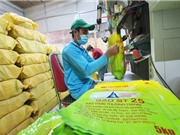 Cục Sở hữu trí tuệ: Không thể bảo hộ nhãn hiệu ST25 cho sản phẩm gạo