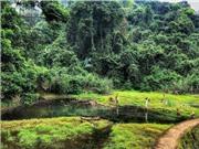 Mỹ tài trợ gần 75 triệu USD để bảo tồn rừng