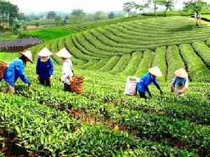 Phát triển thương hiệu nông sản ở Bắc Giang: Thành công từ sự chủ động của các HTX