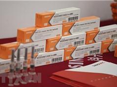 Châu Âu bắt đầu thẩm định vaccine do hãng Sinovac sản xuất