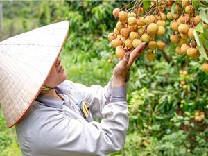 KH&CN thúc đẩy nông sản chủ lực Bắc Giang