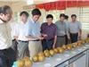 Cao Bằng: Nỗ lực đưa KH&CN nâng cao giá trị quả lê