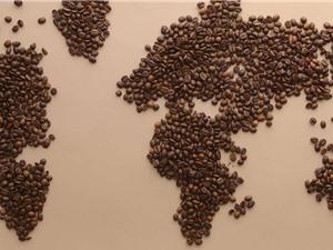 [Video] Đã tìm thấy hạt cà phê ngon nhất thế giới