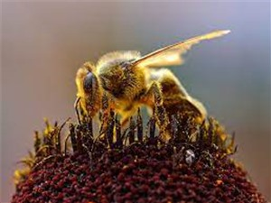 Ong có khả năng phát hiện Covid-19