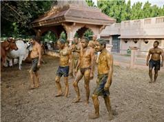 Người dân Ấn Độ bôi phân bò lên cơ thể để ngăn chặn Covid-19