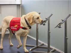 Nhanh hơn xét nghiệm PCR:Chó có thể phát hiện Covid trong vòng chưa đầy một giây