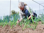 Anh nới lỏng quy định đối với cây trồng và vật nuôi chỉnh sửa gen