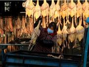 Trung Quốc báo cáo ca bệnh cúm gia cầm H10N3 ở người đầu tiên