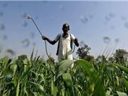 Một phần ba diện tích trồng trọt toàn cầu có nguy cơ ô nhiễm thuốc trừ sâu ở mức cao