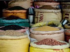 Cây họ đậu: Một gợi ý giúp giảm thiểu tình trạng phụ thuộc vào phân bón ở châu Âu