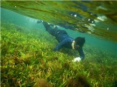 Suy giảm cỏ biển ở miền Trung: Chuyện không bình thường