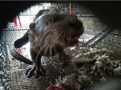 Buôn lậu động vật hoang dã ở Việt Nam chưa có dấu hiệu thuyên giảm