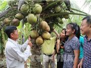 Máy thay người tìm trái dừa sáp