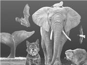 Bí mật di truyền của các loài động vật sống lâu nhất