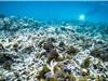 Rạn san hô Great Barrier đang gặp nguy hiểm