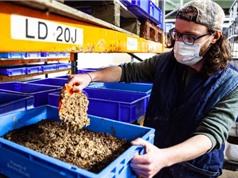 WWF kêu gọi Anh cho phép dùng côn trùng làm thức ăn gia súc để giảm nạn phá rừng