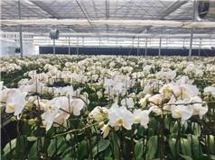 Trung tâm Thử nghiệm và Ươm tạo Công nghệ đẩy mạnh sản xuất nông nghiệp theo hướng hữu cơ