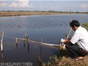 Mô hình xử lý và tái sử dụng nước thải nuôi tôm sú: Giải pháp duy trì hầu như không đồng