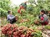 """Giữa tâm dịch, Bắc Giang đã có """"một mùa vụ thành công trên mọi phương diện"""""""