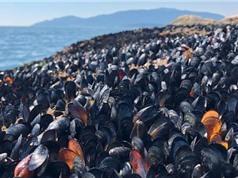 Nắng nóng kỷ lục khiến sinh vật biển Canada chết hàng loạt