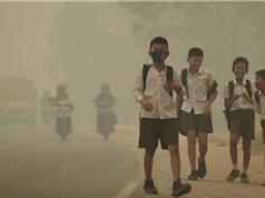 Ô nhiễm không khí ảnh hưởng đến học lực của trẻ em
