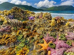 Sóng nhiệt Tây Bắc Thái Bình Dương vừa giết chết hơn một tỷ sinh vật biển
