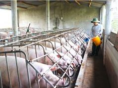 """Trang trại chăn nuôi: """"Ươm"""" các vi khuẩn đa kháng và kháng phổ rộng"""