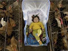 Buôn bán động vật hoang dã: Nguy cơ bùng phát một đại dịch khác