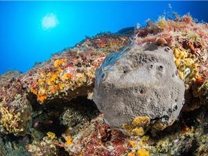 Đã tìm thấy hóa thạch sớm nhất của động vật trên Trái đất?
